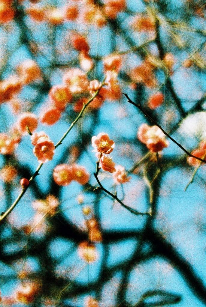 lomography-kickstarter-achromat_kieko-hoshi_japan